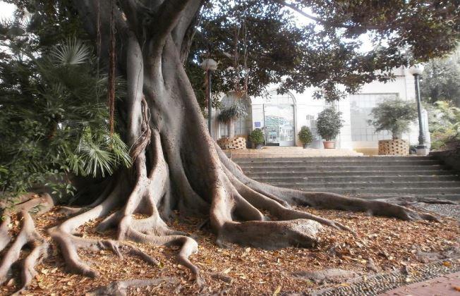 giardino villa ormond