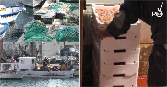 crisi pesca