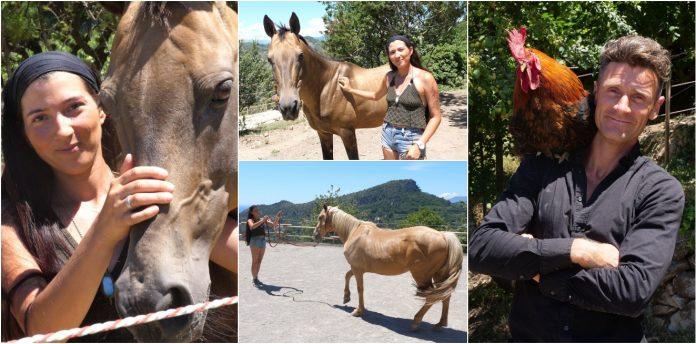 Akhal-Teke cavallo dorato vallebona