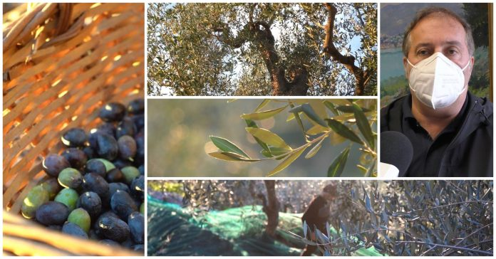 stagione olivicola 2021